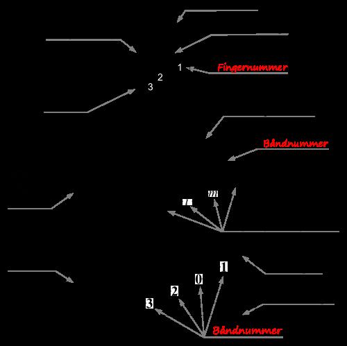 """For klassisk gitar er det vanlig å bruke en egen notasjon der tall med sirkel rundt for streng-nummer, tall for bånd, og """"pima"""" for klimprehåndas fingre. Dog brukes denne notasjonen som regel svært sparsomt. Grep og tabulatur derimot, gir alltid presis info hvilke streng og hvilke bånd som skal spilles, men sier ingenting om klimprehånd. Merk ellers at gitargrep vanligvis oppgir tall for fingre, mens noter og tabulatur bruker bånd-tall. For grepet C ser du at tallene blir de samme for fingre og bånd."""